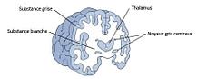 cerveau surdoué hpi