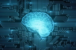 cerveau hpi surdoué zebre neurosciences anatomie