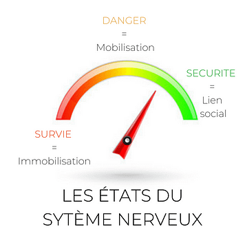 systeme nerveux nerf vague theorie polyvagale